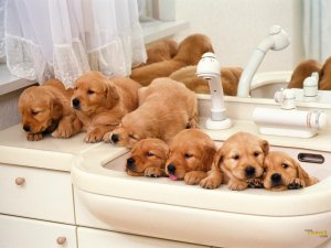 cute-puppies-puppies-13632075-1600-1200